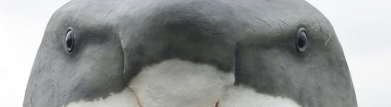 """Ein Arbeiter löst am Freitag (20.10.2006) in Hamburg die Spannriemen von dem 14 Meter großen Modell eines gerade angelieferten Riesenhaies (Megalodon). Die naturgetreue Nachbildung des Urzeitriesen gehört zur Ausstellung """"Monster der Tiefsee"""", in der rund 30 Modelle von Meereslebewesen der Urzeit ab dem 03.11.2006 auf dem Hamburger Winterdom zu sehen sind. Foto: Ulrich Perrey dpa/lno +++(c) dpa - Report+++"""