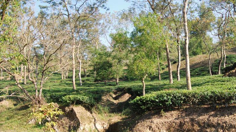 Die Arbeiterinnen verbringen ihr gesamtes Leben auf den Teeplantagen