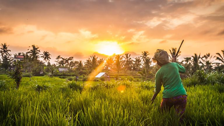 Reisanbau auf dem Uni-Dach