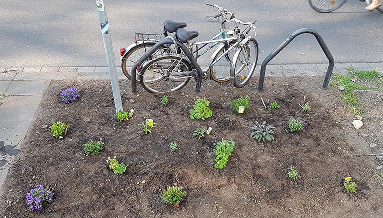 Das fertig bepflanzte Beet von Reporter Stephan Beuting