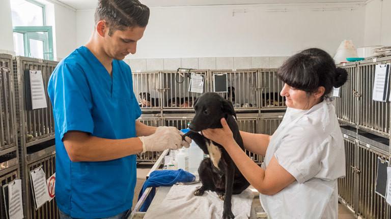 Tierarzt Vlad Srbu und sein Team bei einer OP im Tierheim Smeura