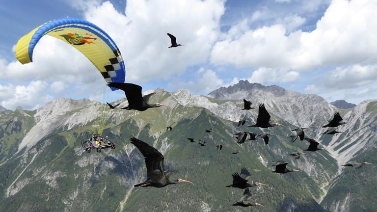 Vögel und Ultraleichtflugzeug in der Luft