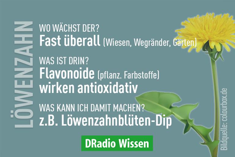 Löwenzahn-Faktbox