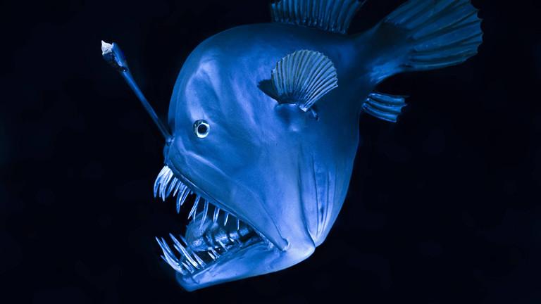 Tiefseefisch Lampe