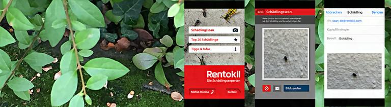 App zur Bestimmung von Schädlingen