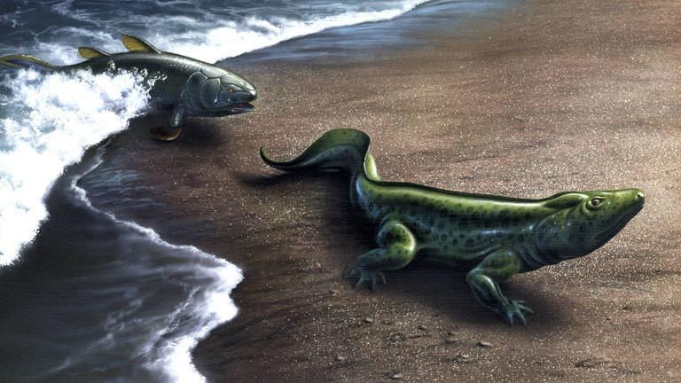 Evolution: Aus Quastenflossern entstehen die ersten Amphibien.