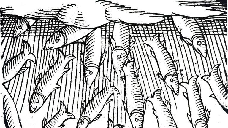 Ein Holzschnitt aus dem 16. Jahrhundert zeigt, wie Fische vom Himmel regnen