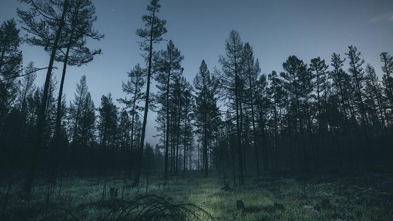 """""""Jahrhundert-Katastrophe"""" für die Wälder"""