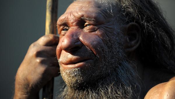 Nachbildung eines älteren Neandertalers im Neanderthal-Museum in Mettmann.