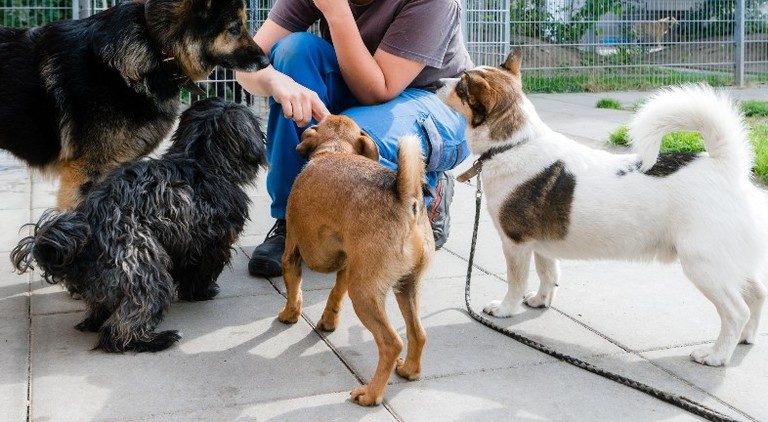 Eine Mitarbeiterin in einem Tierheim spielt mit Hunden.