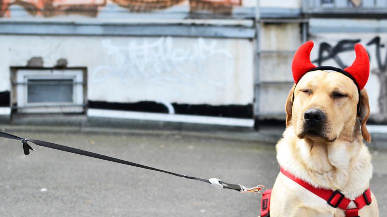 Hund mit Teufelshörnern.