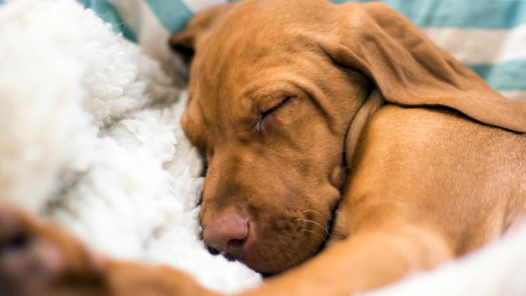 Ein Hund schläft.