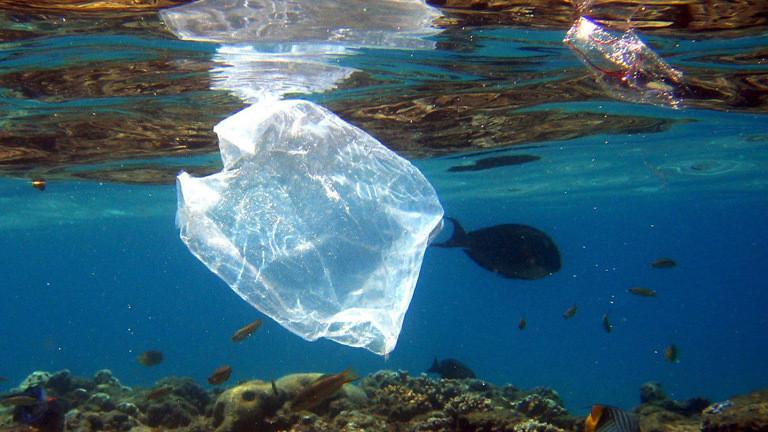 Plastikmüll im Meer.