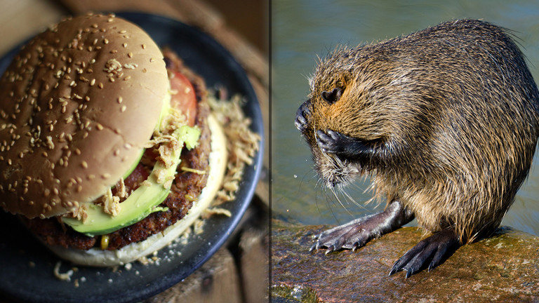 Burger und Nutria