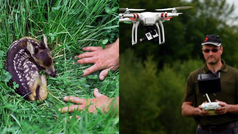 Collage: Ein Mann mit einer fliegenden Drohne sucht nach Rehkitzen und findet eins im hohen Gras.