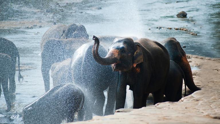 Elefanten bespritzen sich gegenseitig mit Wasser.