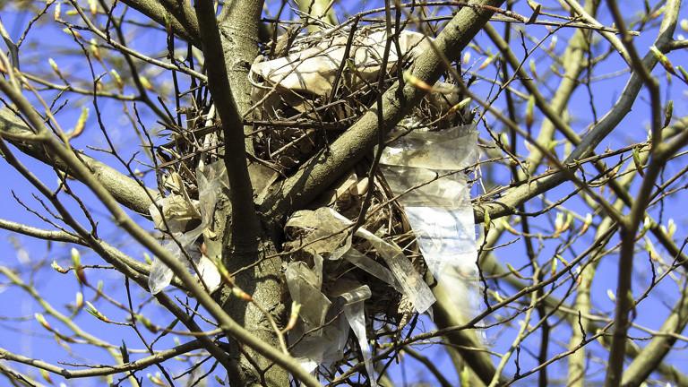 Ein Vogelnest, das teils mit Plastik gebaut ist.