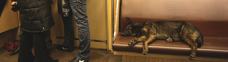 Straßenhunde in Moskau fahren Metro.
