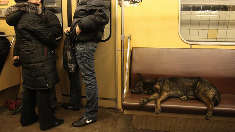 Straßenhund in Moskau fährt mit der Metro.