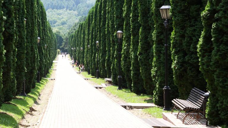Thuja-Hecken in einem Park