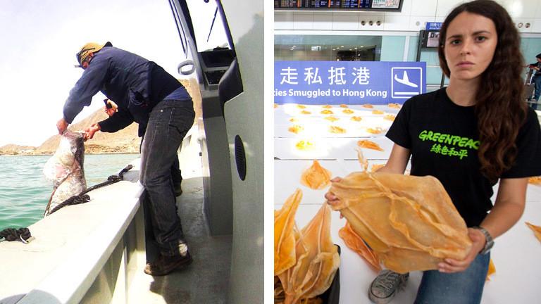 Ein Fischer fischt illegal einen Totoaba-Fische. Eine Aktivistin hält eine Fake-Schwimmblase aus Plastik in die Kamera, um zu protestieren.