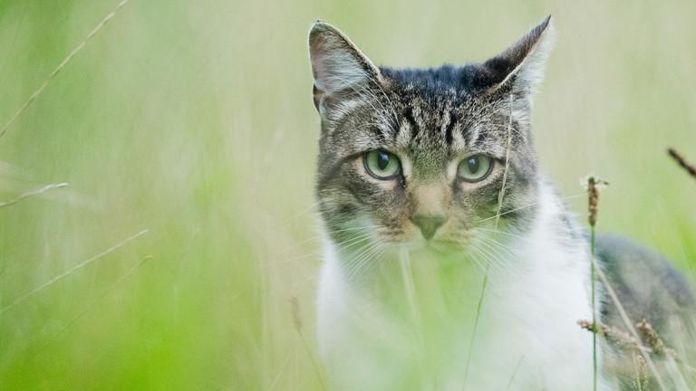 Eine Katze auf der Wiese