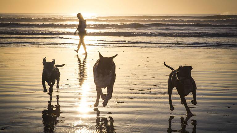 Drei Hunde rennen an einem Strand entlang.