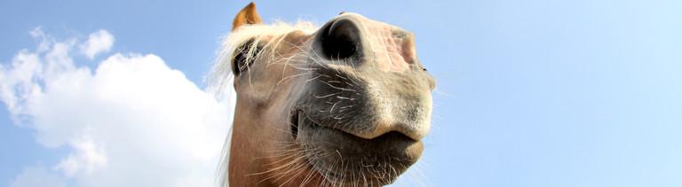 Pferdekopf vor blauem Himmel