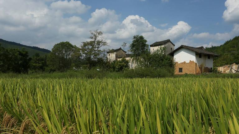 Ein Feld mit Häusern im Hintergrund