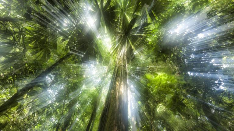 Sonnenstrahlen scheinen durch die Blätterkrone eines Regenwalds in Costa Rica