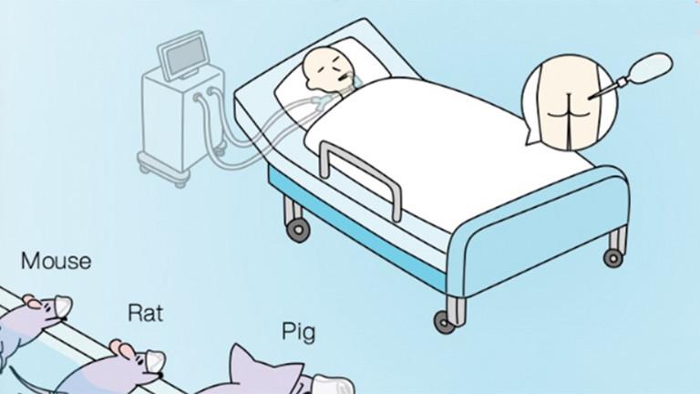 Grafisches Modell einer rektalen Beatmungsmethode
