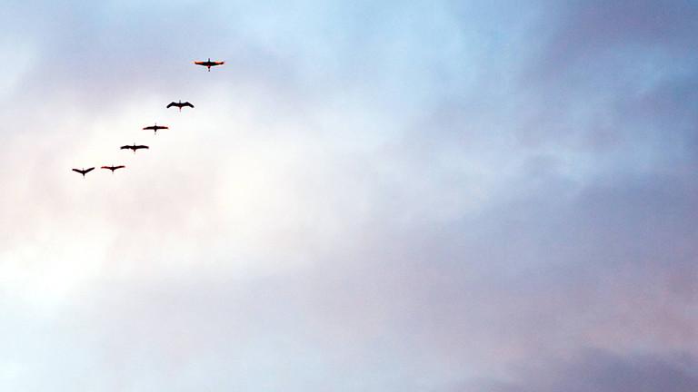 Zugvögel im Sonnenuntergang