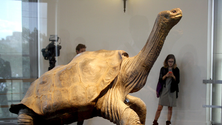 Einbalsamierter Lonesome George in Ney York