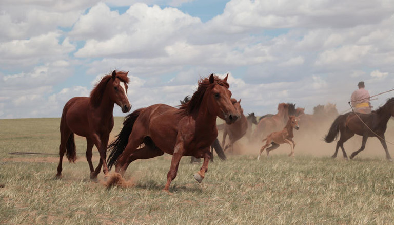 Eine Pferdeherde in der inneren Mongolei