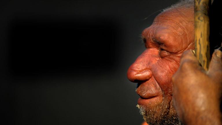 Die Nachbildung eines älteren Neandertalers steht am Dienstag (10.02.2009) im Neanderthal-Museum in Mettmann.
