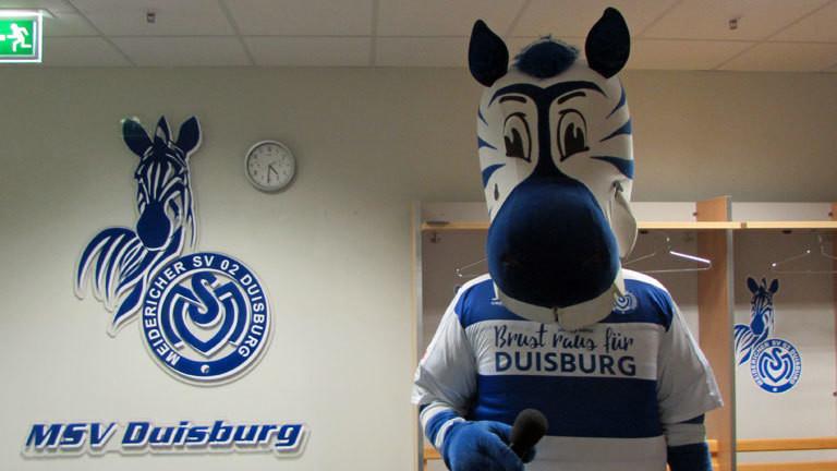 Promo Hase für den Verein MSV Duisburg