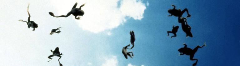 Frösche fallen vom Himmel.
