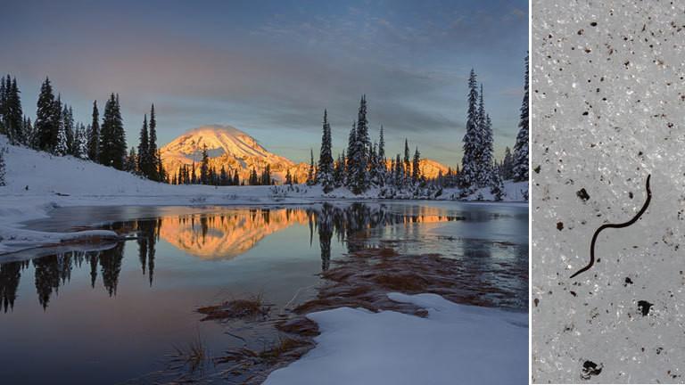 Mount Rainier im Bundesstaat Washington, USA, und ein Eiswurm im Gletschereis