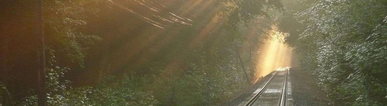 Bahntrasse mit Bäumen