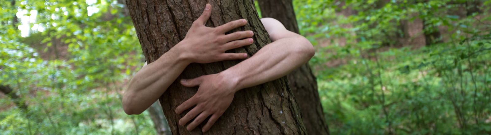 Ein Baum wird umarm