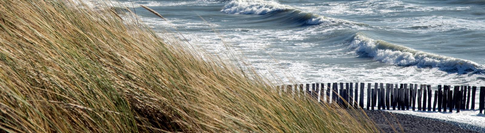 Eine Küste mit Deich.