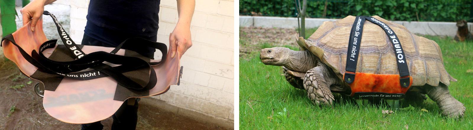 Die Spornschildkröte Helmuth im Gelsenkirchener Zoo Zoom Erlebniswelt.