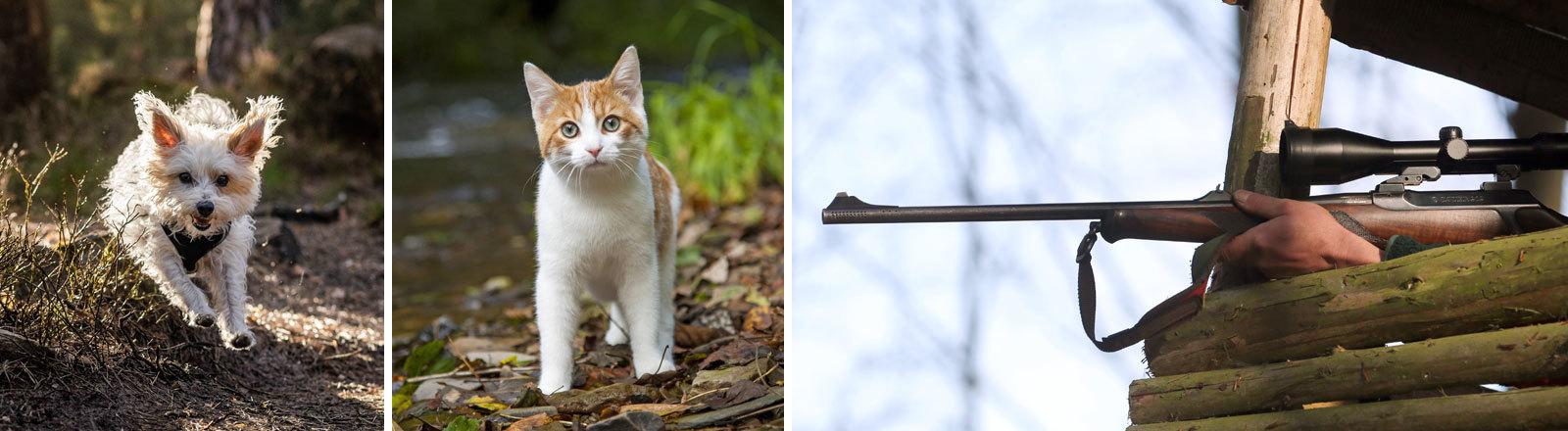 Hund und Katze im Wald. Ein Jäger zielt mit einem Gewehr.