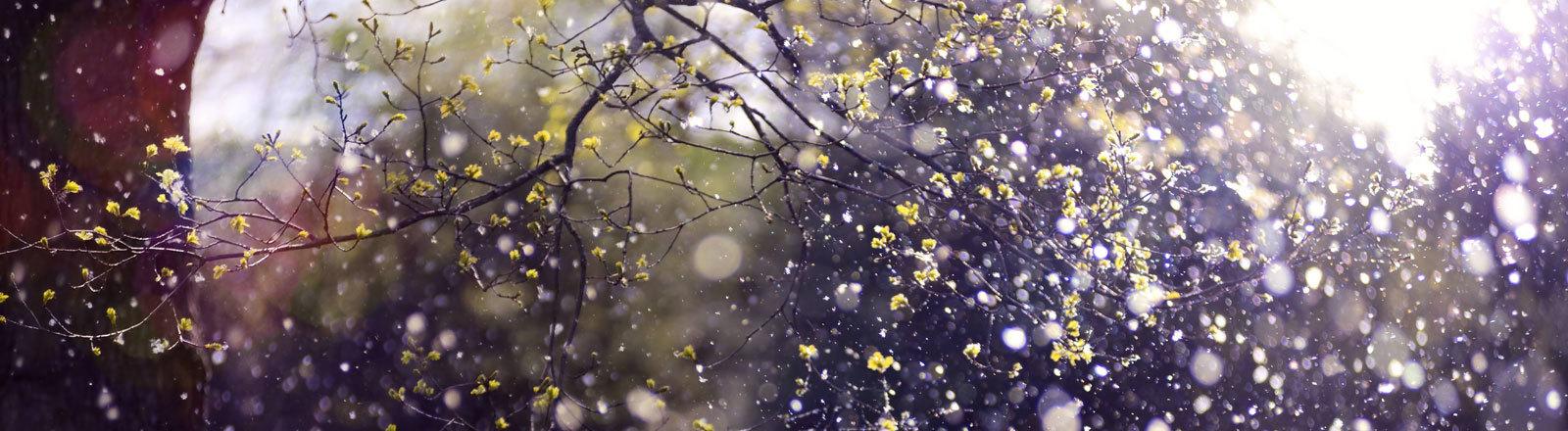 Fliegende Pollen.