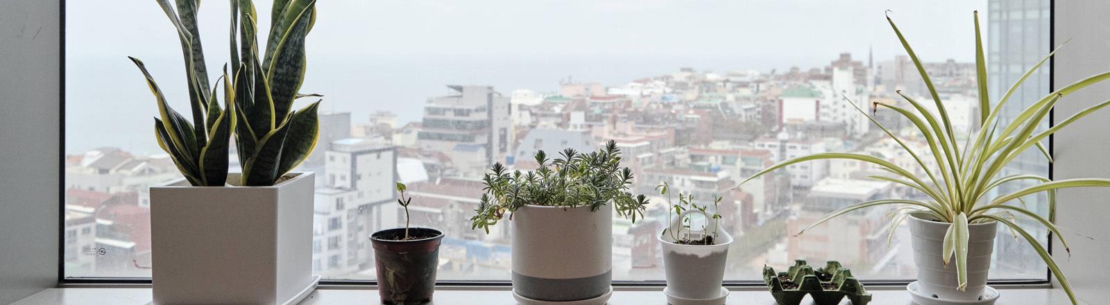 Topfpflanzen auf einem Fenstersims
