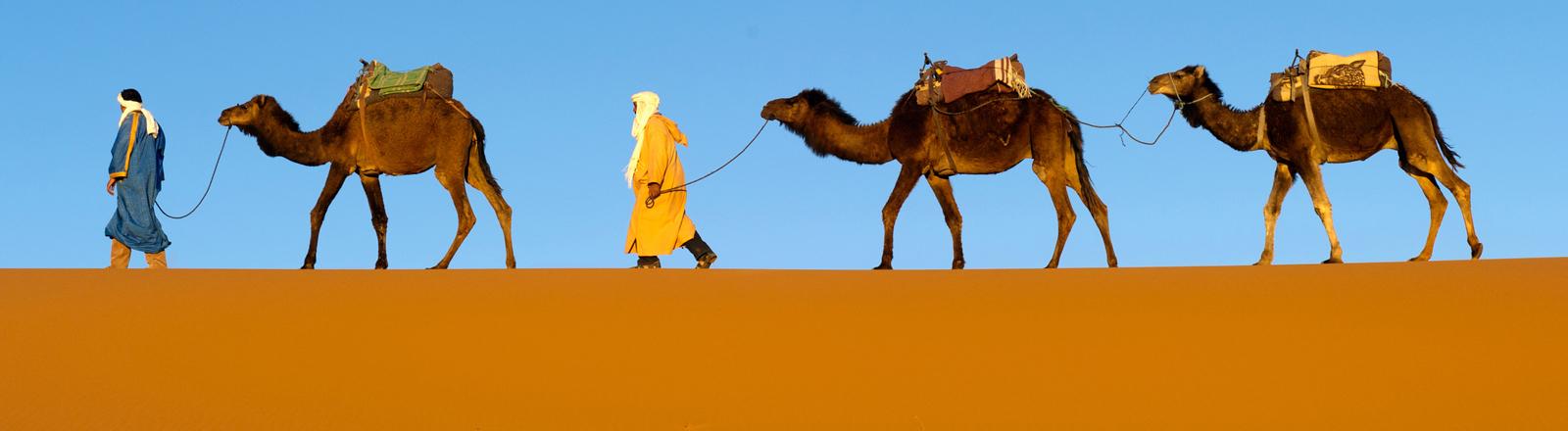 Kameltreiber vom Volk der Berber mit ihren Dromedaren in den Duenenvon Erg Chebbi bei Merzouga in Marokko.