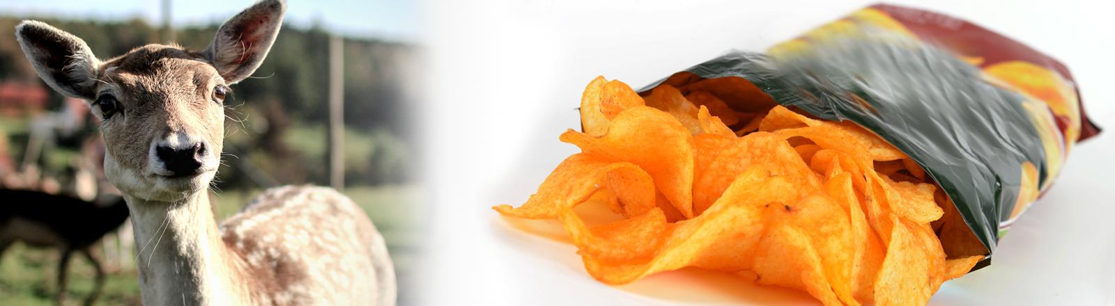 Reh und Chips