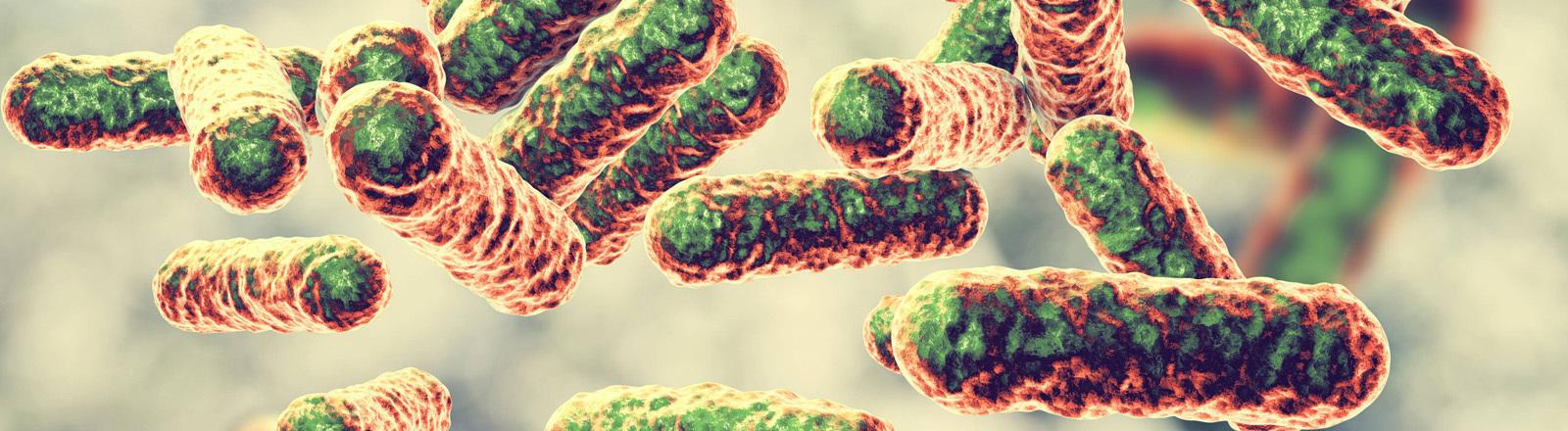 Bartonella-quintana-Bakterien, die das Schützengraben-Fieber oder Wolhynisches Fieber auslösen.