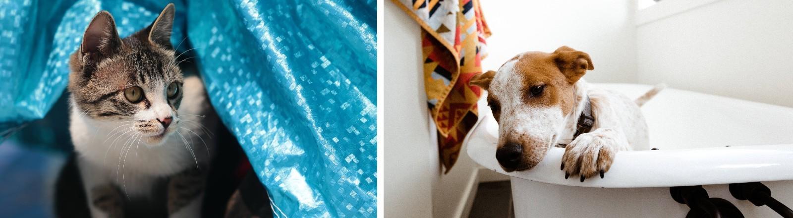 Eine Katze unter einer Folie und ein Hund in einer Badewanne.