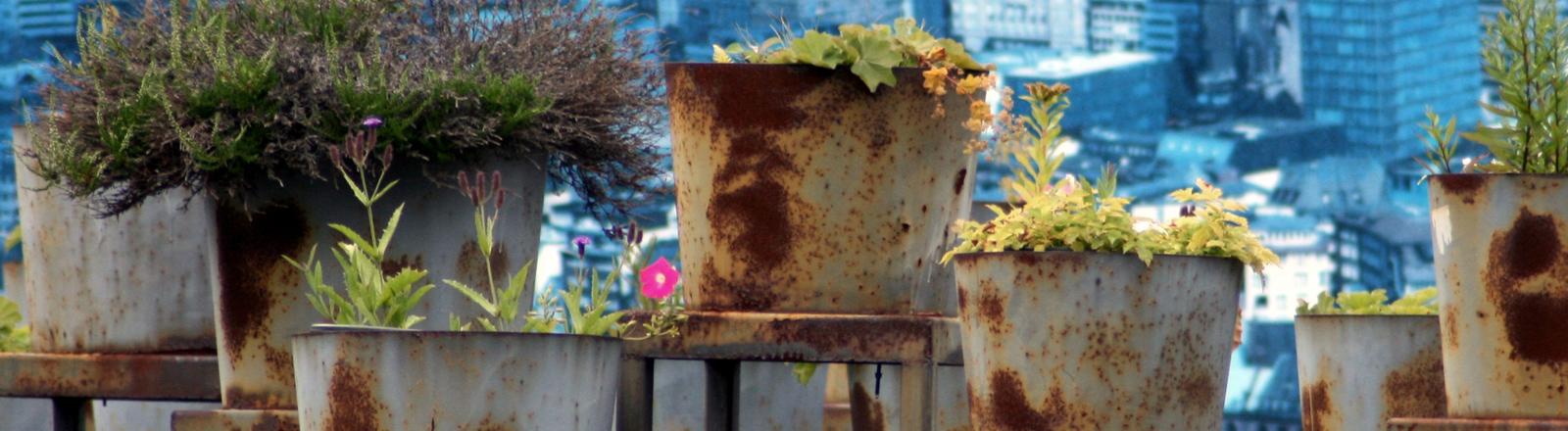 Pflanzenkübel über der Stadt